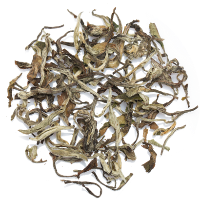 white-tea-leaves-chaisafari