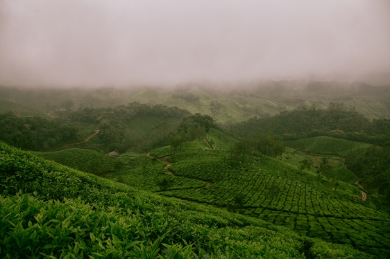Darjeeling and assam